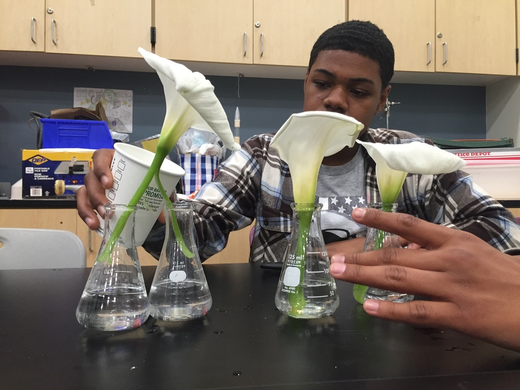 Section 4 Flowers with color - Nayeli\'s Chemistry Class Blog